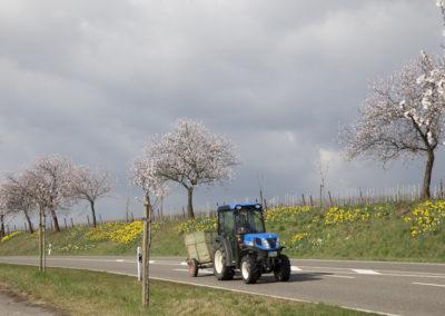 ©www.paulinejoosten.nl - Amandelroute Pfalz __E9T9416
