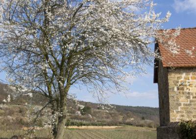 ©www.paulinejoosten.nl - Amandelroute Pfalz __E9T9634