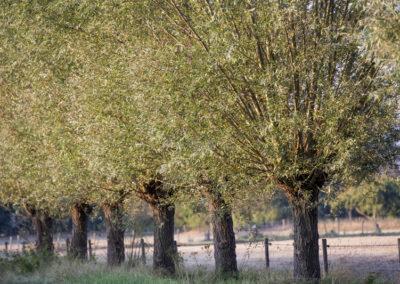 BUITENLEVEN VAKANTIES |Nieuw Senneke & Ooievaar GORSSEL