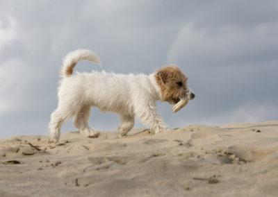 puppylove.. Bella © www.paulinejoosten.nl