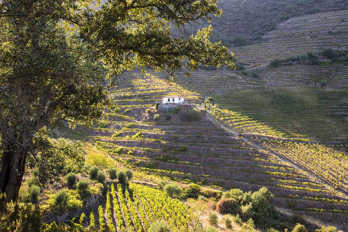 OSCAR QUEVEDO -  PORT WINE  - Portugal © www.paulinejoosten.nl