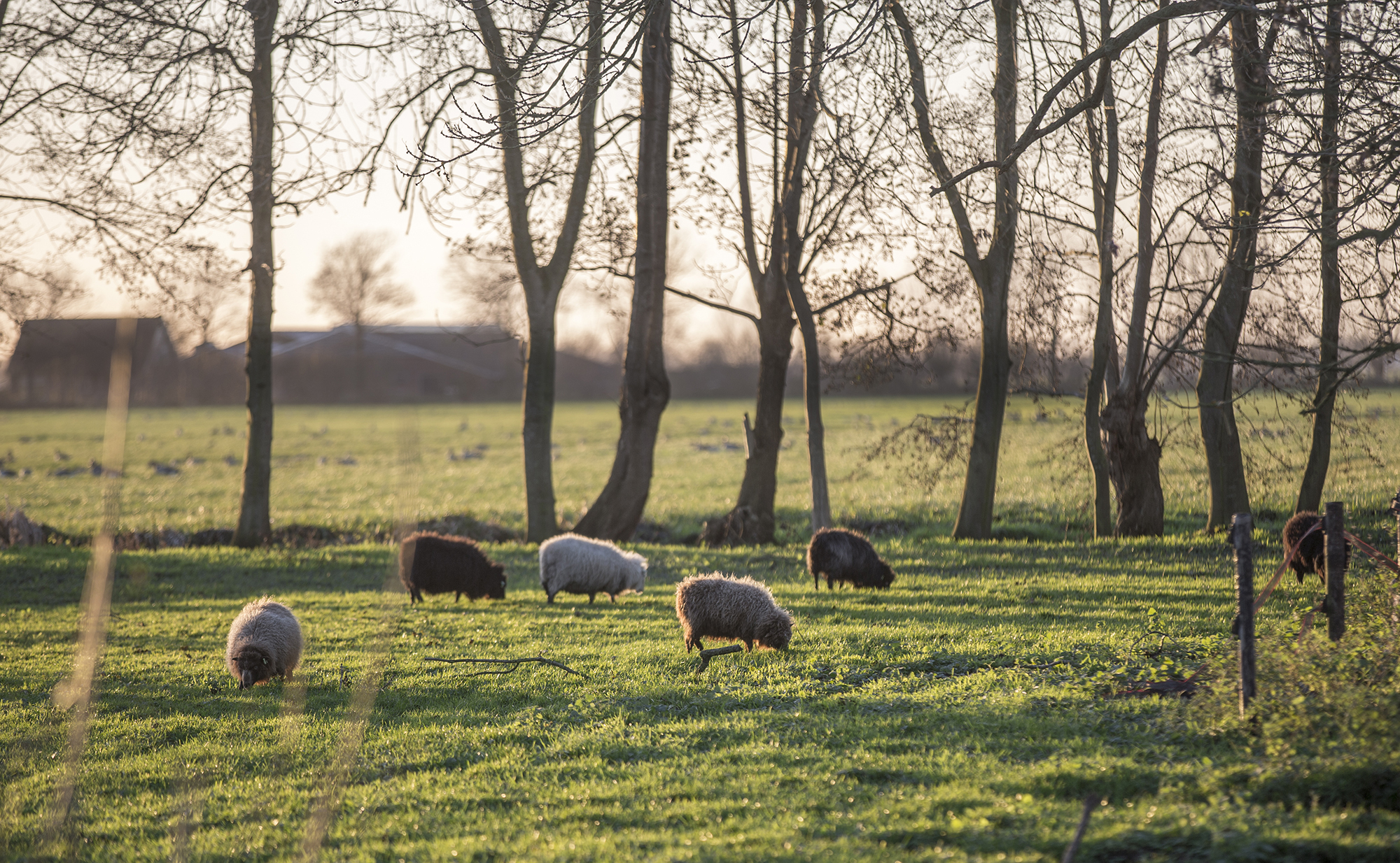 binnenkijken bij Margret Mann © www.paulinejoosten.nl